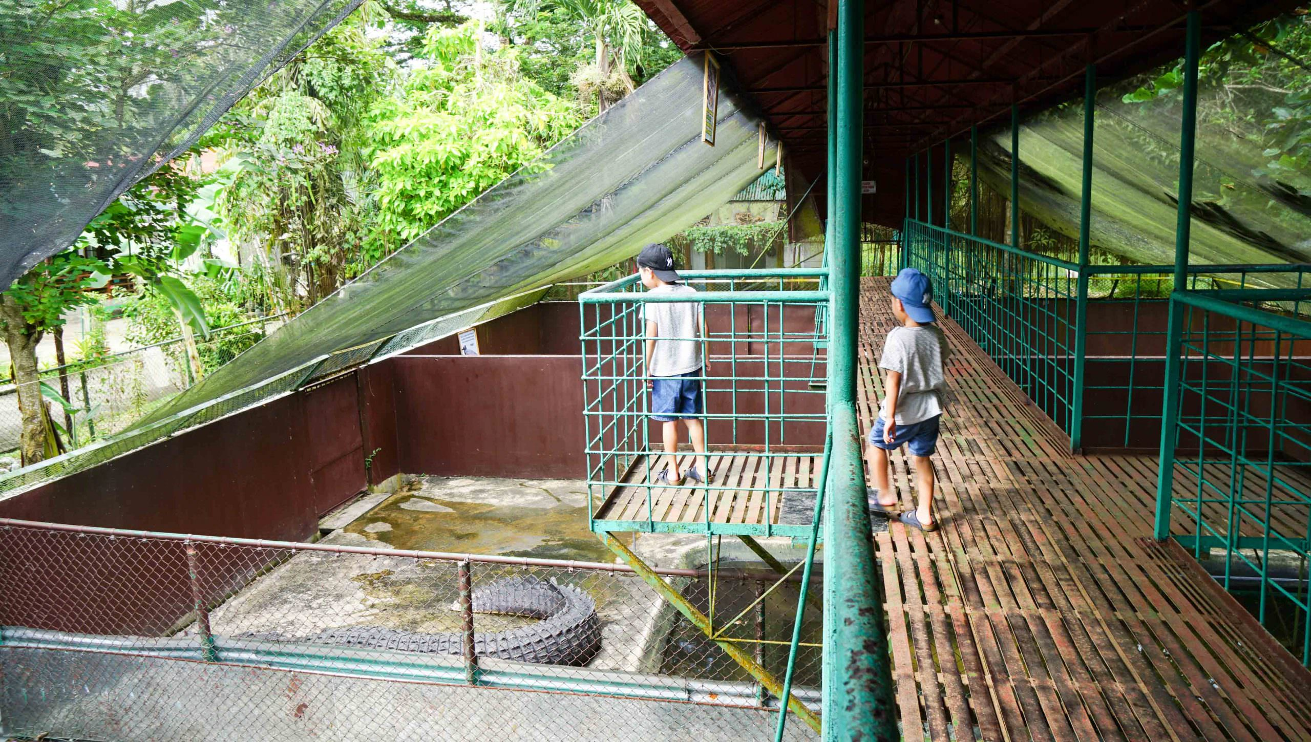 巴拉望親子自由行│公主港行程推薦:全世界最大的鱷魚在這裡!鱷魚養殖場Palawan Wildlife Rescue and Conservation Center (Crocodile Farm)